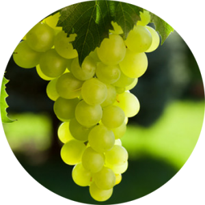 new-zealand-green-grape